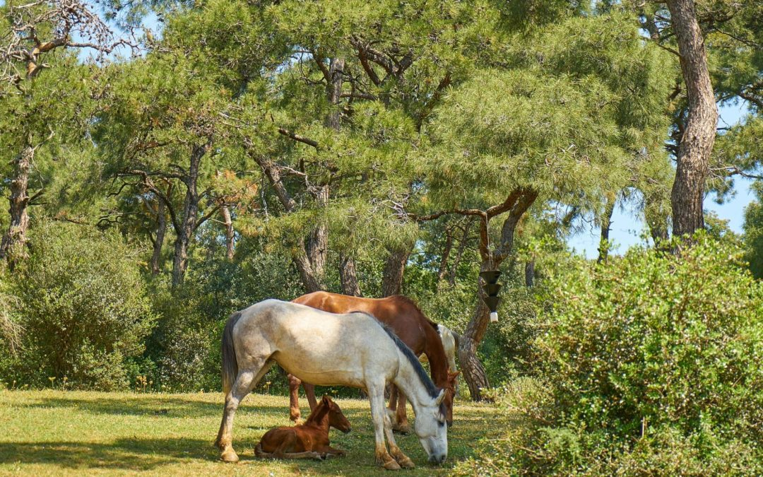 Why You Should Remove Black Walnut Trees on Your Horse Pasture