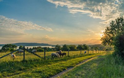 What to Know About Pasture Reclamation