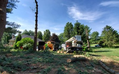 What Tree Services Does Timber Works Offer?
