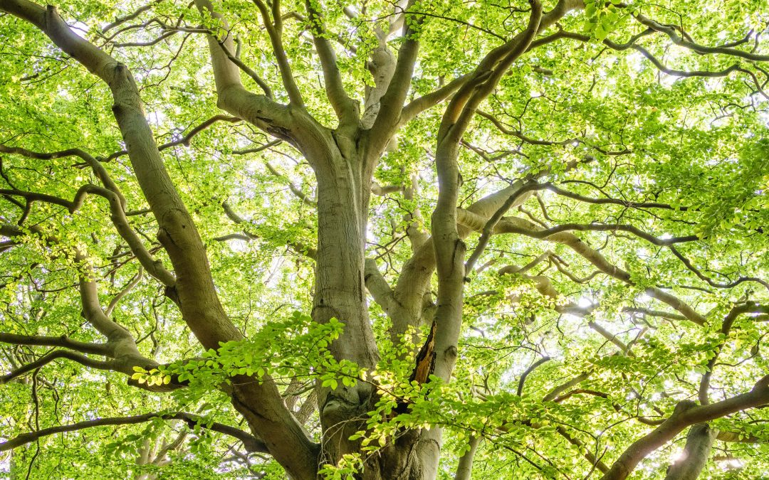 What Factors Affect Tree Removal Cost?