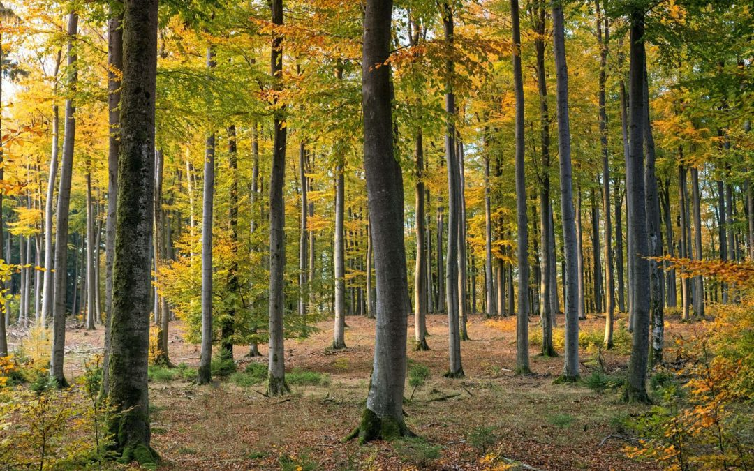 Is Forestry Mulching Good for the Environment?