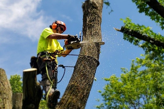 20188 Tree Removal