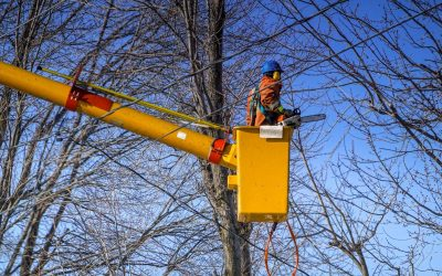 When's the Best Time to Trim Your Trees?
