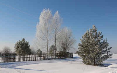 Preparing Your Trees for Cold Weather