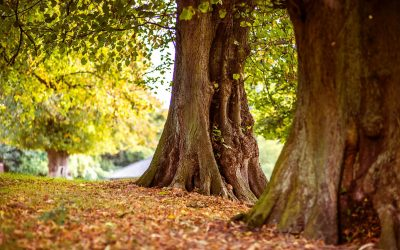Tree Diseases to Watch Out For